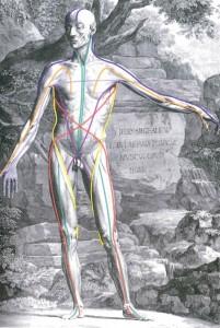 筋膜連鎖1